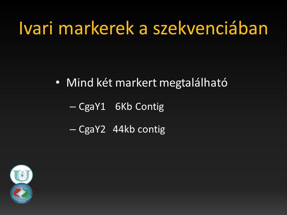 Ivari markerek a szekvenciában Mind két markert megtalálható – CgaY1 6Kb Contig – CgaY2 44kb contig