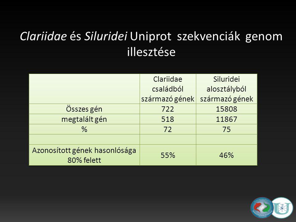 Clariidae és Siluridei Uniprot szekvenciák genom illesztése