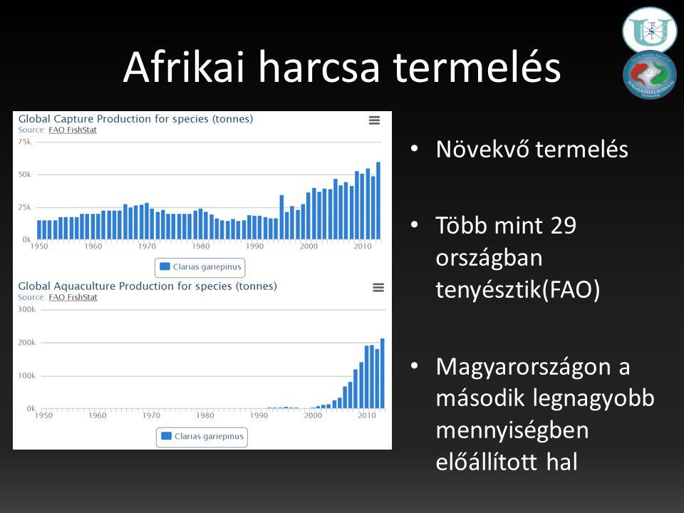 Afrikai harcsa termelés Növekvő termelés Több mint 29 országban tenyésztik(FAO) Magyarországon a második legnagyobb mennyiségben előállított hal
