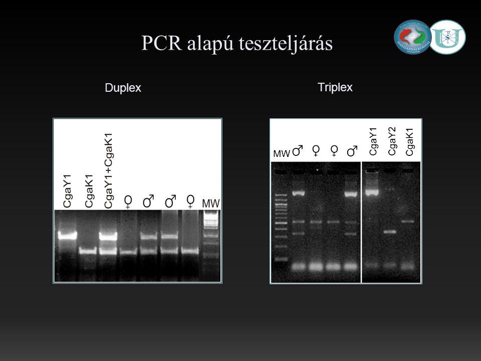 Triplex Duplex PCR alapú teszteljárás