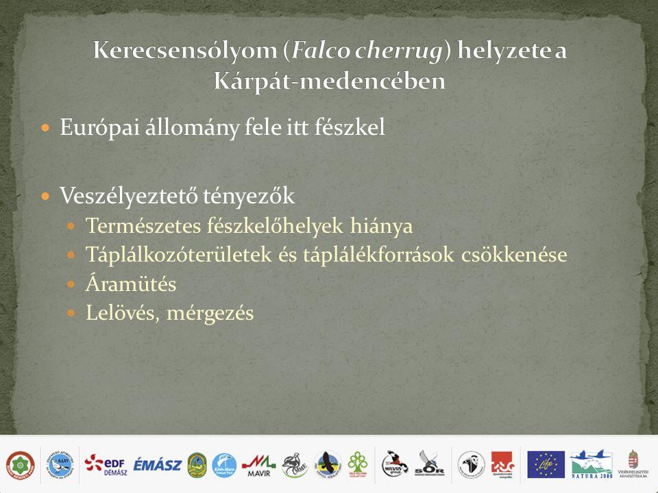 Európai állomány fele itt fészkel Veszélyeztető tényezők Természetes fészkelőhelyek hiánya Táplálkozóterületek és táplálékforrások csökkenése Áramütés Lelövés, mérgezés