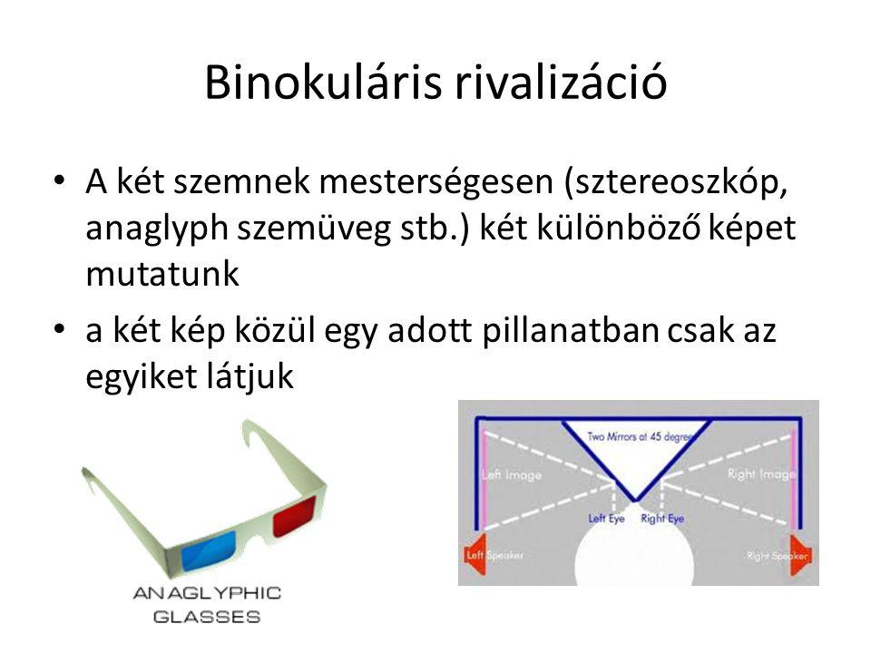 Binokuláris rivalizáció A két szemnek mesterségesen (sztereoszkóp, anaglyph szemüveg stb.) két különböző képet mutatunk a két kép közül egy adott pillanatban csak az egyiket látjuk