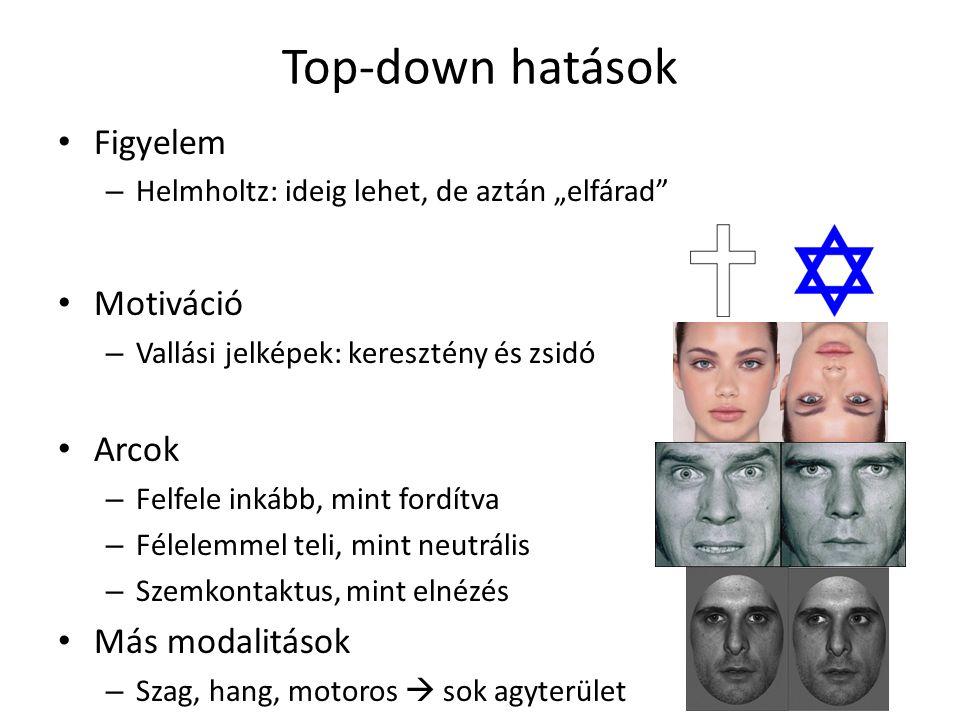 """Top-down hatások Figyelem – Helmholtz: ideig lehet, de aztán """"elfárad"""" Motiváció – Vallási jelképek: keresztény és zsidó Arcok – Felfele inkább, mint"""