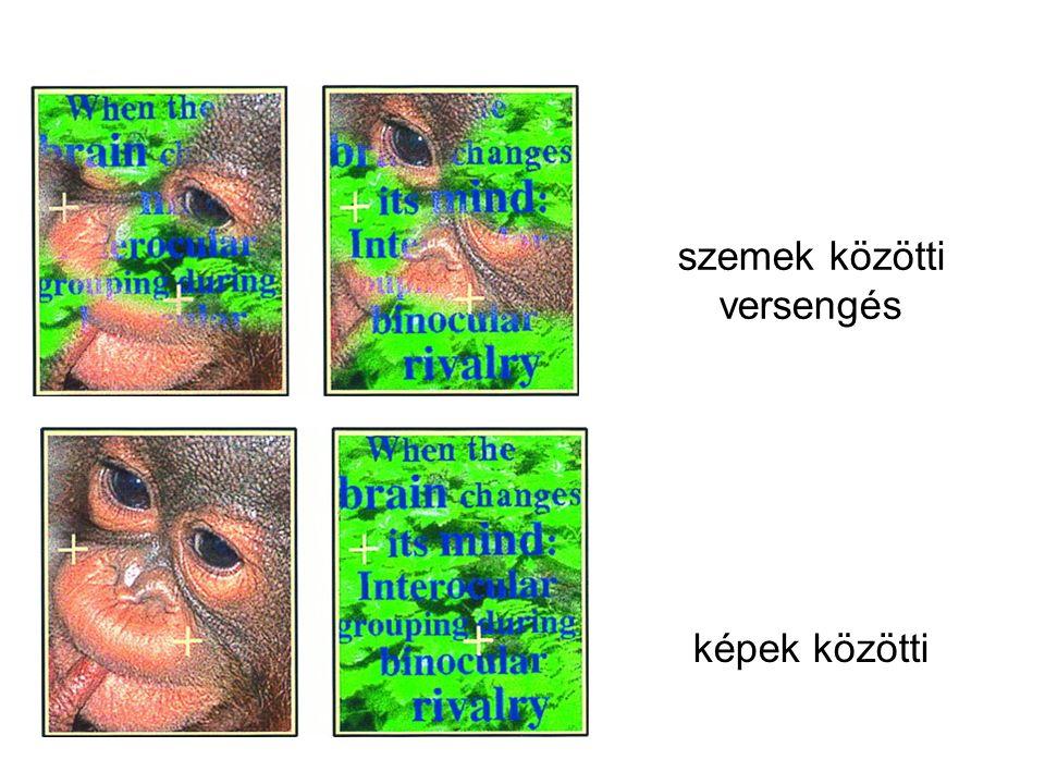 szemek közötti versengés képek közötti