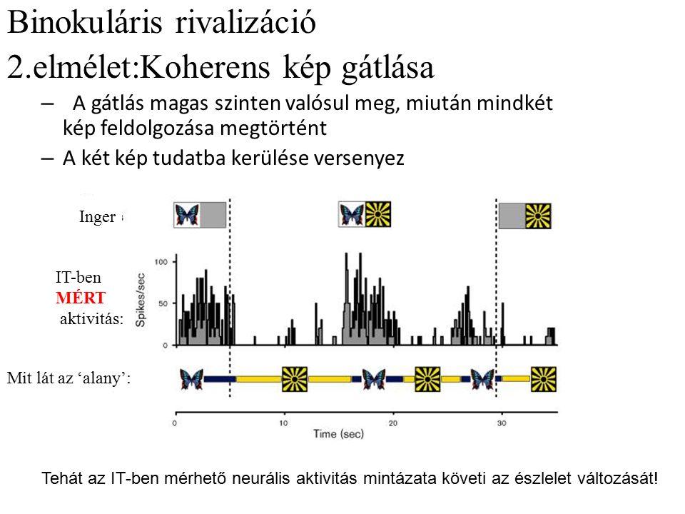 Binokuláris rivalizáció 2.elmélet:Koherens kép gátlása – A gátlás magas szinten valósul meg, miután mindkét kép feldolgozása megtörtént – A két kép tu