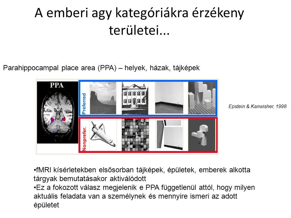 A emberi agy kategóriákra érzékeny területei... PPA Preferred Nonprefer.