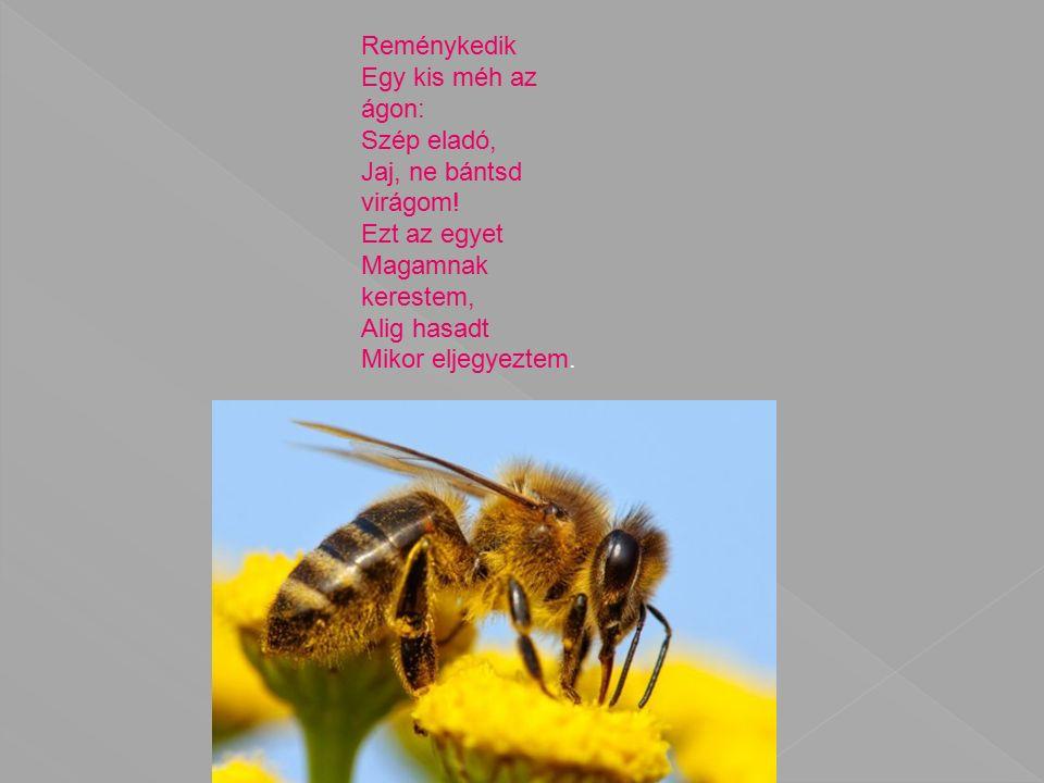 Reménykedik Egy kis méh az ágon: Szép eladó, Jaj, ne bántsd virágom.