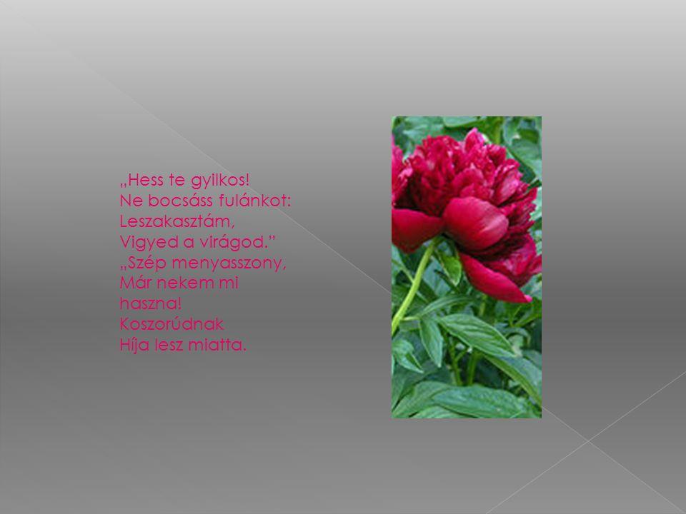 Koszorúdnak Híja lesz miatta - Ezt a kis méh Keserűn mondhatta, Mert a szíve, Hiába parányi, Nagyon tudott A virágért fájni.