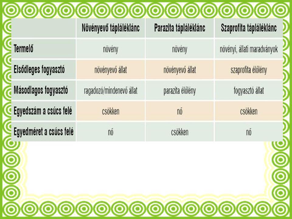 Táplálékhálózat Az életközösségekben több, rendszerint nagyon sok tápláléklánc alakul ki.