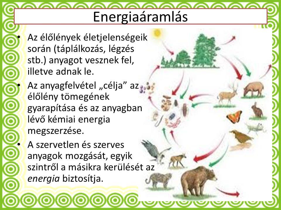 Energiaáramlás Az élőlények életjelenségeik során (táplálkozás, légzés stb.) anyagot vesznek fel, illetve adnak le.