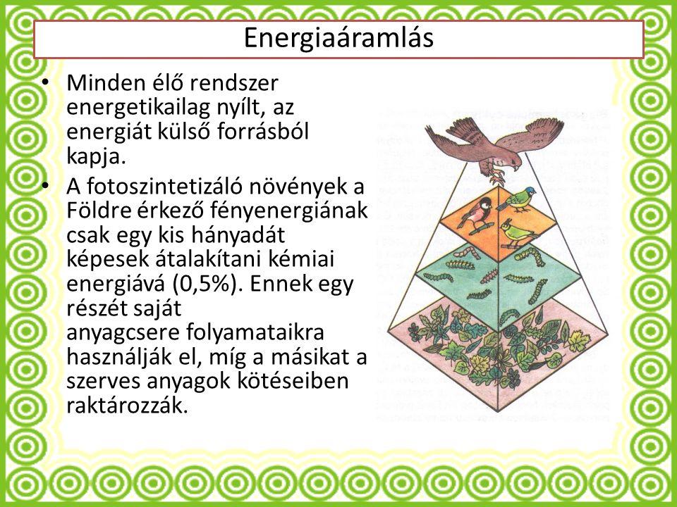 Minden élő rendszer energetikailag nyílt, az energiát külső forrásból kapja.