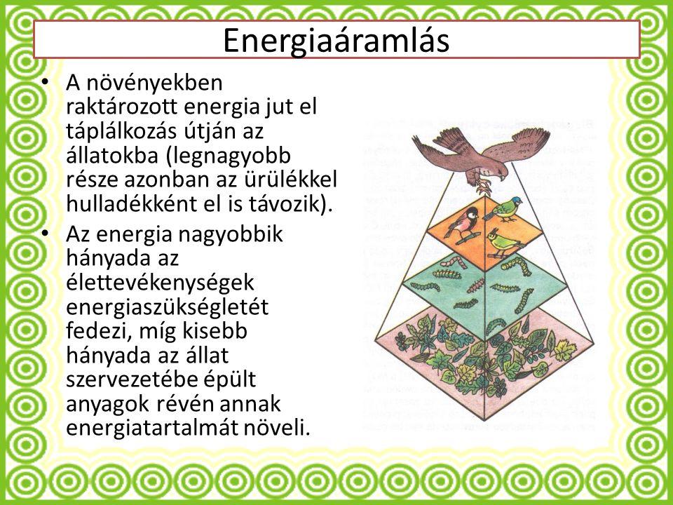 A növényekben raktározott energia jut el táplálkozás útján az állatokba (legnagyobb része azonban az ürülékkel hulladékként el is távozik).