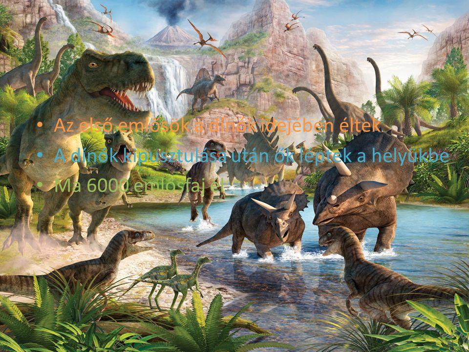 Az első emlősök a dínók idejében éltek A dínók kipusztulása után ők léptek a helyükbe Ma 6000 emlősfaj él