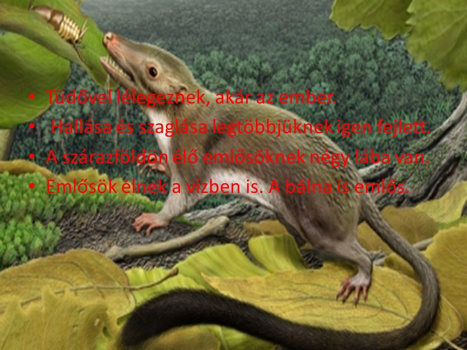 Folyóvölgyekben, tópartokon él.Testhossza farokkal együtt 100-120 cm.