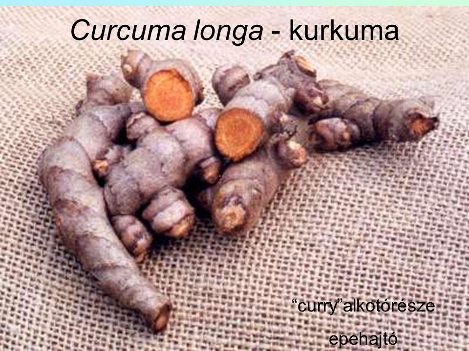"""Curcuma longa - kurkuma """"curry""""alkotórésze epehajtó"""