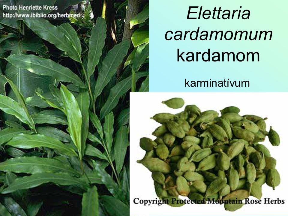 Elettaria cardamomum kardamom karminatívum