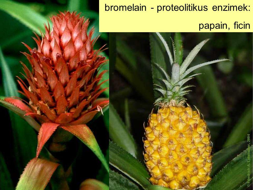 bromelain - proteolitikus enzimek: papain, ficin