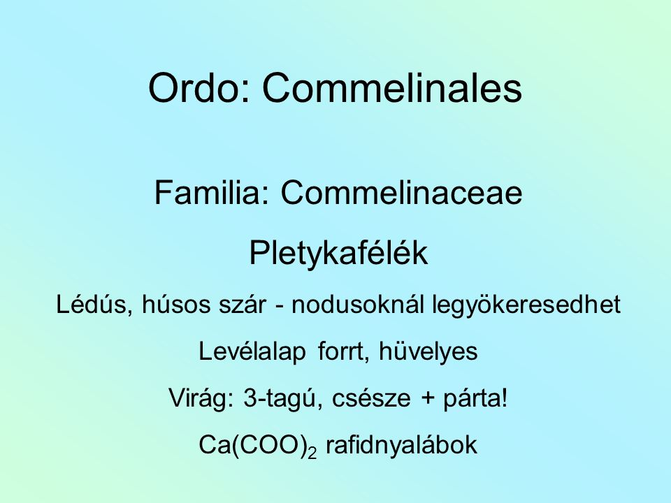Ordo: Commelinales Familia: Commelinaceae Pletykafélék Lédús, húsos szár - nodusoknál legyökeresedhet Levélalap forrt, hüvelyes Virág: 3-tagú, csésze