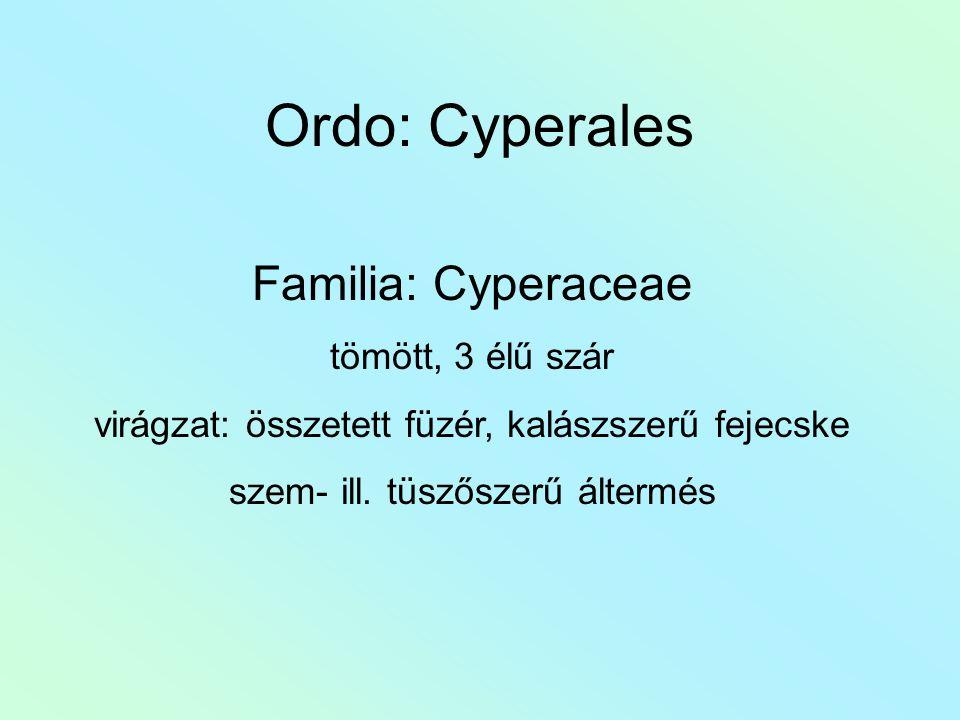 Ordo: Cyperales Familia: Cyperaceae tömött, 3 élű szár virágzat: összetett füzér, kalászszerű fejecske szem- ill. tüszőszerű áltermés