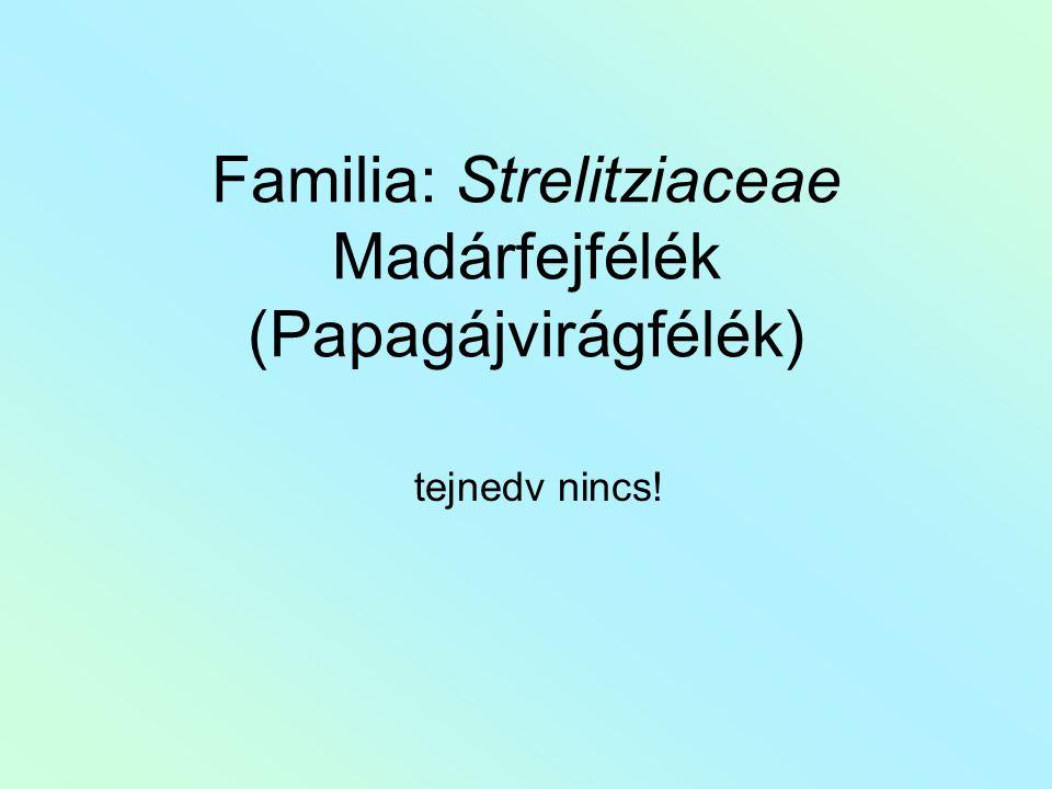 Familia: Strelitziaceae Madárfejfélék (Papagájvirágfélék) tejnedv nincs!