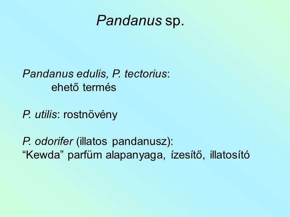 """Pandanus edulis, P. tectorius: ehető termés P. utilis: rostnövény P. odorifer (illatos pandanusz): """"Kewda"""" parfüm alapanyaga, ízesítő, illatosító Pand"""