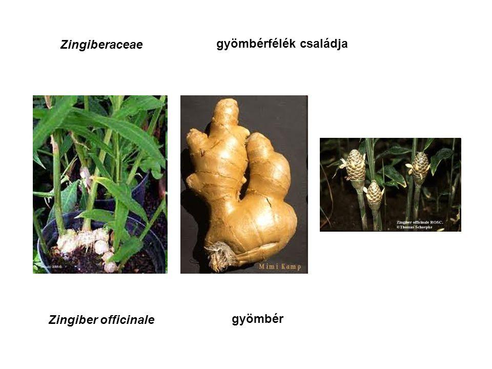 A gyógyszerkönyvben nem hivatalos néhány fontos gyógy- és fűszernövény