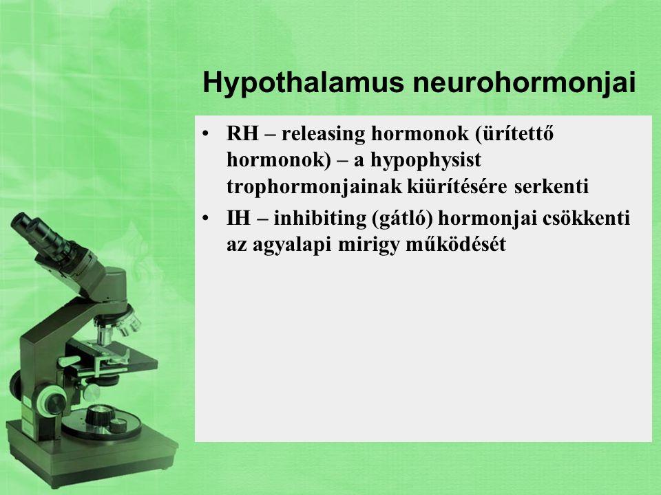 Hypothalamus neurohormonjai RH – releasing hormonok (ürítettő hormonok) – a hypophysist trophormonjainak kiürítésére serkenti IH – inhibiting (gátló)