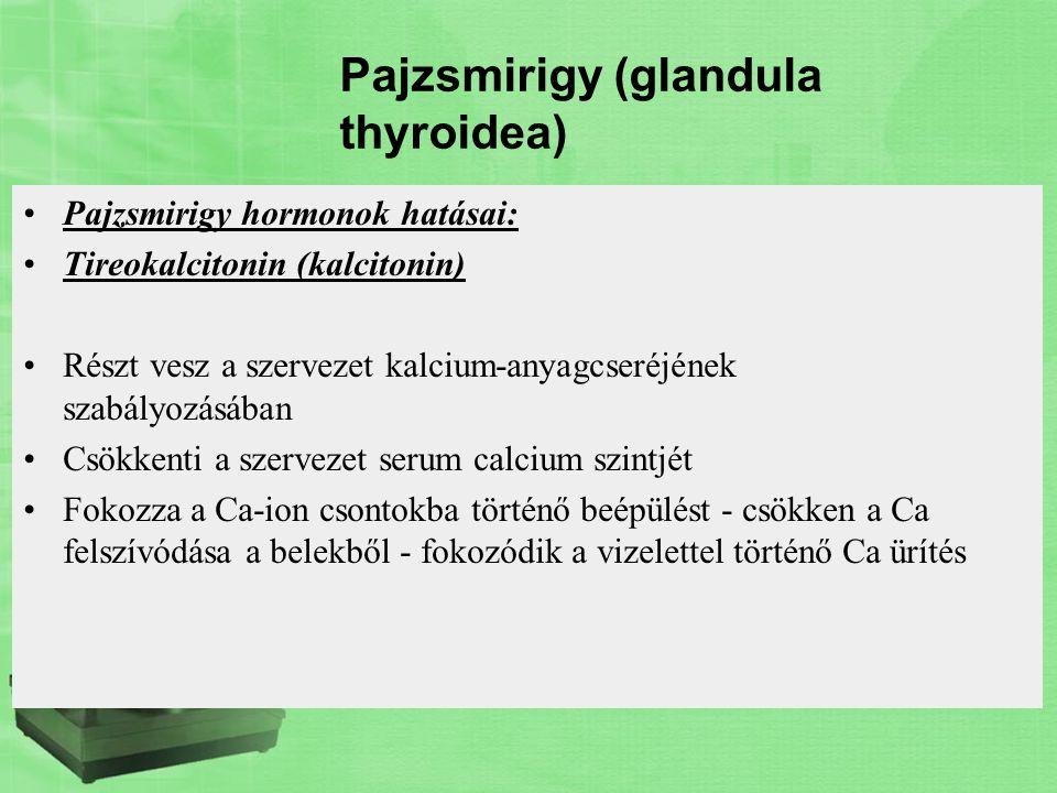 Pajzsmirigy (glandula thyroidea) Pajzsmirigy hormonok hatásai: Tireokalcitonin (kalcitonin) Részt vesz a szervezet kalcium-anyagcseréjének szabályozás