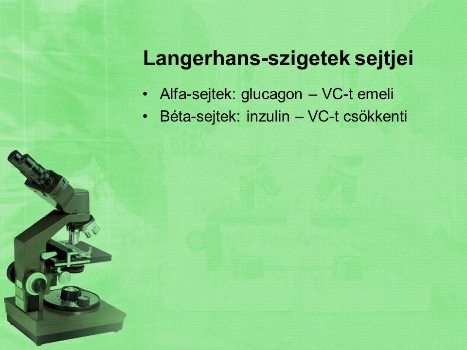 Langerhans-szigetek sejtjei Alfa-sejtek: glucagon – VC-t emeli Béta-sejtek: inzulin – VC-t csökkenti
