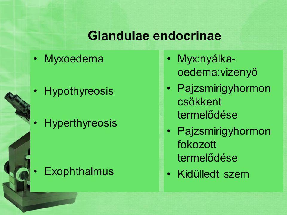 Hypophysis-Hypothalamus Babszem nagyságú szerv Az ékcsont töröknyergében helyezkedik el (sella turcica) Hypophysisnyél révén a köztiagy hypothalamusával áll összeköttetésben Három része: Elülső lebeny (adenohypophysis) Köztirész-középső lebeny (pars intermedia) Hátsó lebeny(neurohypophysis)