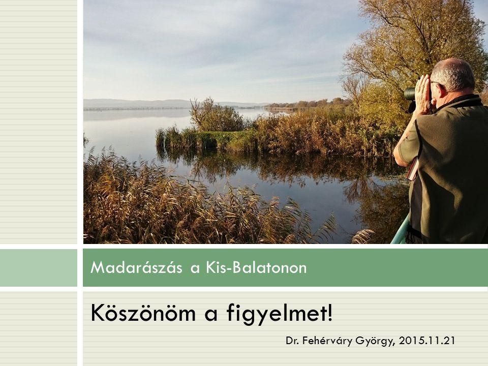 Madarászás a Kis-Balatonon Köszönöm a figyelmet! Dr. Fehérváry György, 2015.11.21