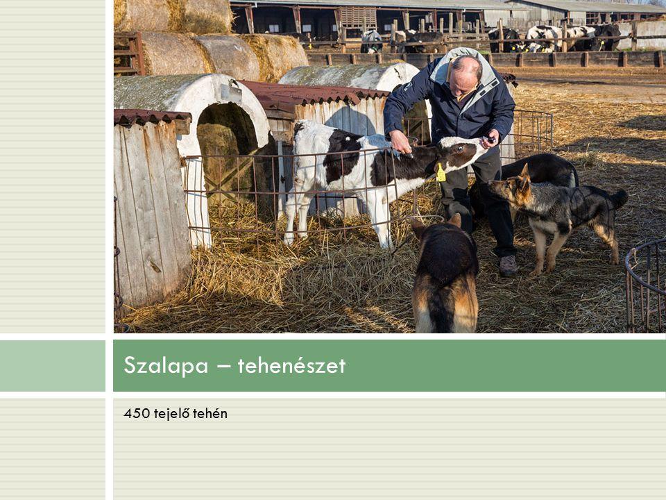 Szalapa – tehenészet 450 tejelő tehén