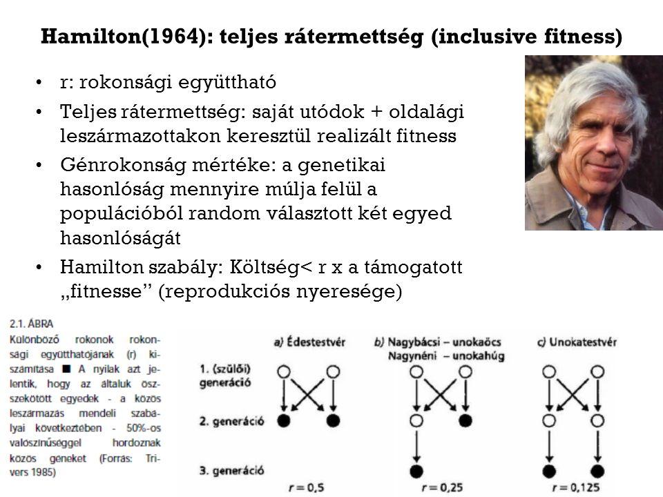 Hamilton(1964): teljes rátermettség (inclusive fitness) r: rokonsági együttható Teljes rátermettség: saját utódok + oldalági leszármazottakon keresztü