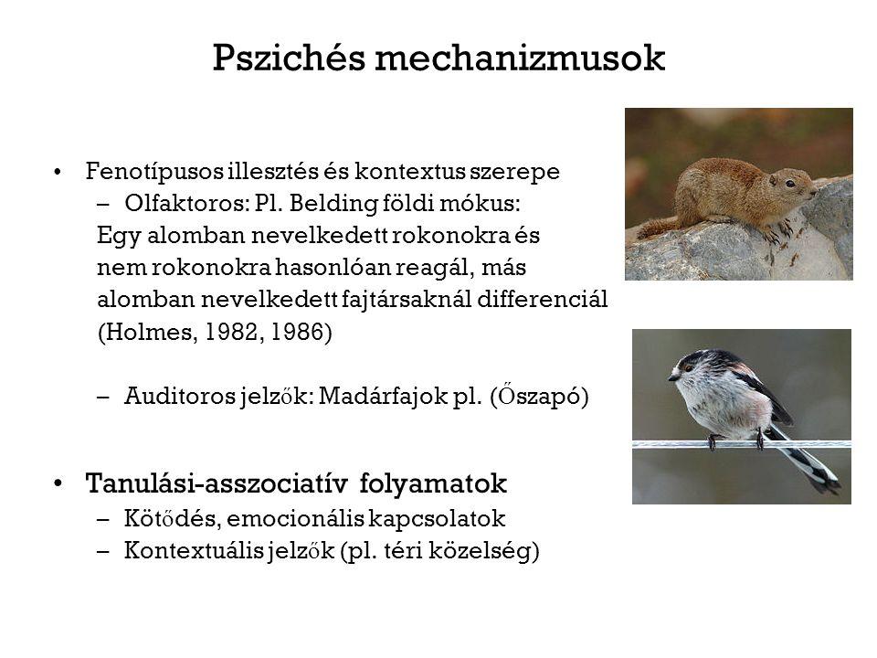 Pszichés mechanizmusok Fenotípusos illesztés és kontextus szerepe –Olfaktoros: Pl. Belding földi mókus: Egy alomban nevelkedett rokonokra és nem rokon
