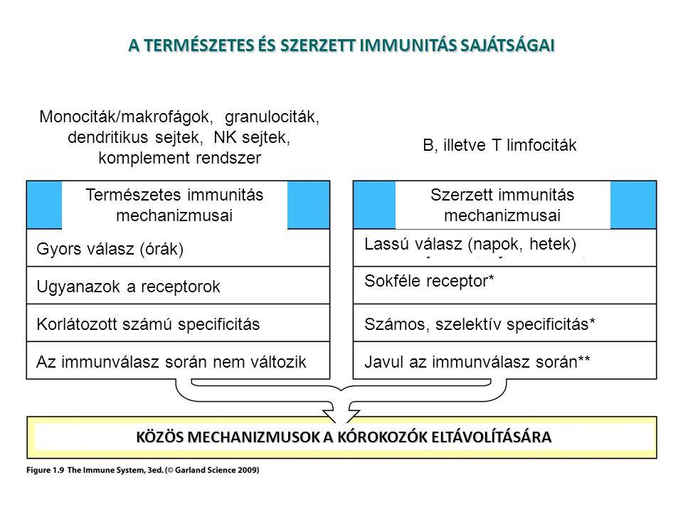 A TERMÉSZETES ÉS SZERZETT IMMUNITÁS SAJÁTSÁGAI Természetes immunitás mechanizmusai Szerzett immunitás mechanizmusai Gyors válasz (órák) Lassú válasz (napok, hetek) Ugyanazok a receptorok Sokféle receptor* Korlátozott számú specificitásSzámos, szelektív specificitás* Az immunválasz során nem változikJavul az immunválasz során** KÖZÖS MECHANIZMUSOK A KÓROKOZÓK ELTÁVOLÍTÁSÁRA Monociták/makrofágok, granulociták, dendritikus sejtek, NK sejtek, komplement rendszer B, illetve T limfociták