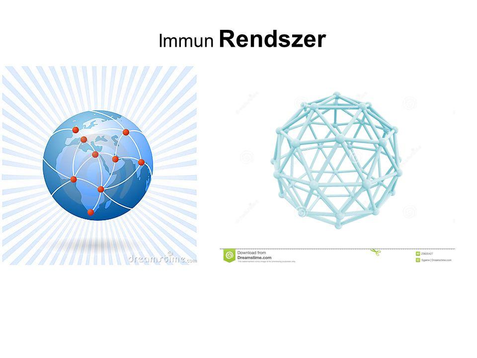 Immun Rendszer