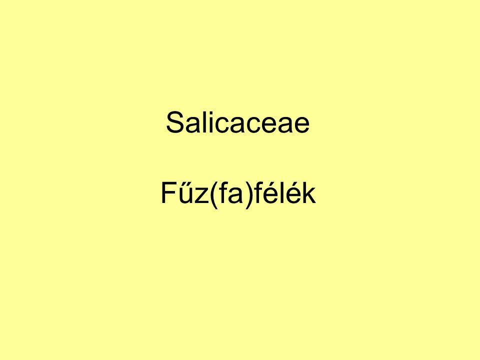 Salicaceae Fűz(fa)félék