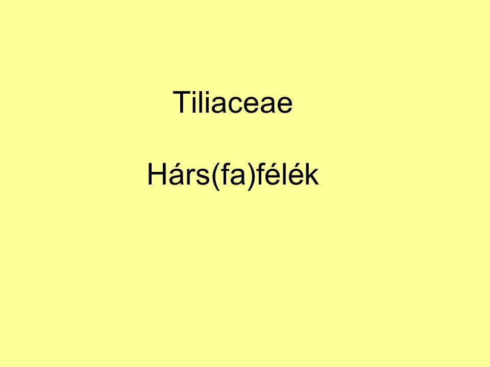 Tiliaceae Hárs(fa)félék
