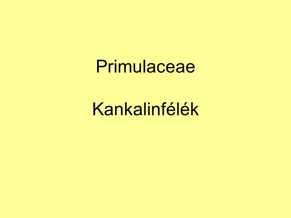 Primulaceae Kankalinfélék