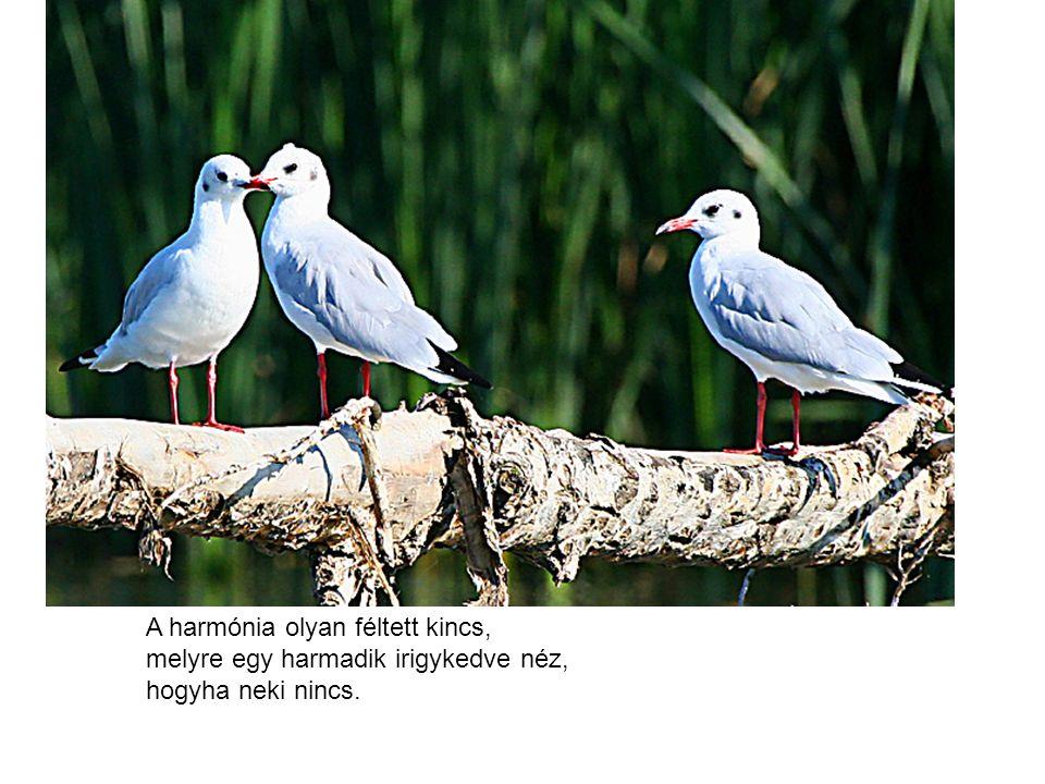 A harmónia olyan féltett kincs, melyre egy harmadik irigykedve néz, hogyha neki nincs.