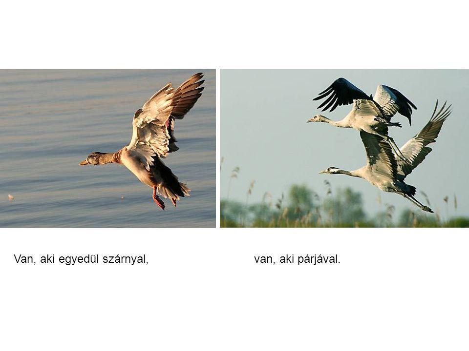 Van, aki egyedül szárnyal,van, aki párjával.