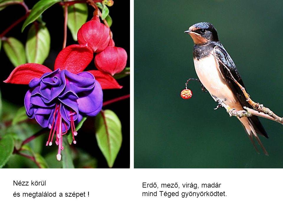Nézz körül és megtalálod a szépet ! Erdő, mező, virág, madár mind Téged gyönyörködtet.