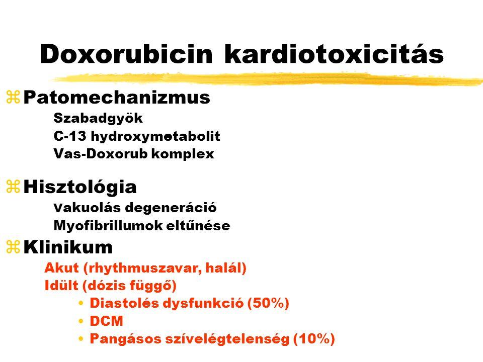 Doxorubicin kardiotoxicitás zPatomechanizmus Szabadgyök C-13 hydroxymetabolit Vas-Doxorub komplex zHisztológia V akuolás degeneráció Myofibrillumok eltűnése zKlinikum Akut (rhythmuszavar, halál) Idült (dózis függő) Diastolés dysfunkció (50%) DCM Pangásos szívelégtelenség (10%)