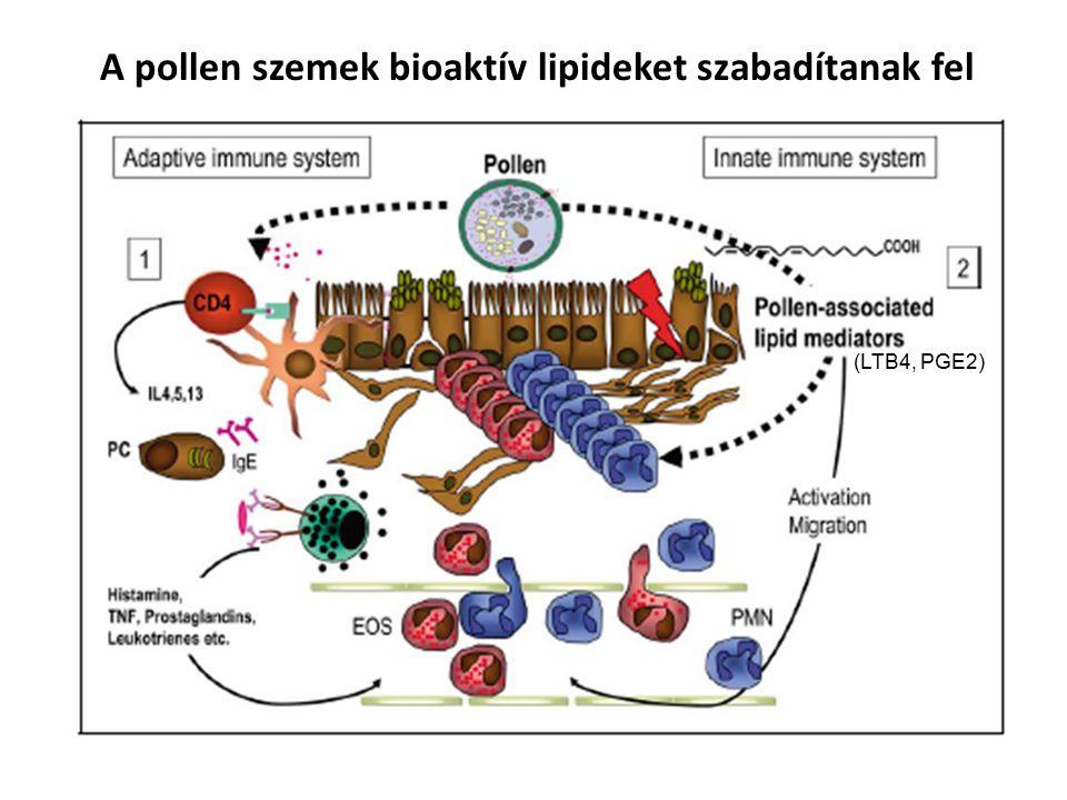 (LTB4, PGE2) A pollen szemek bioaktív lipideket szabadítanak fel