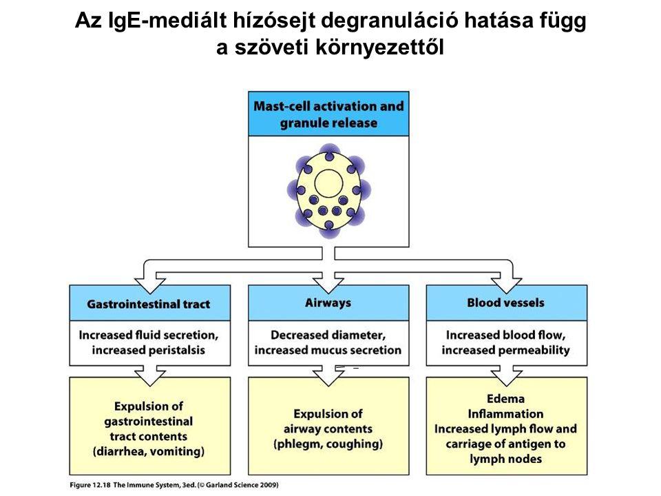 Az IgE-mediált hízósejt degranuláció hatása függ a szöveti környezettől