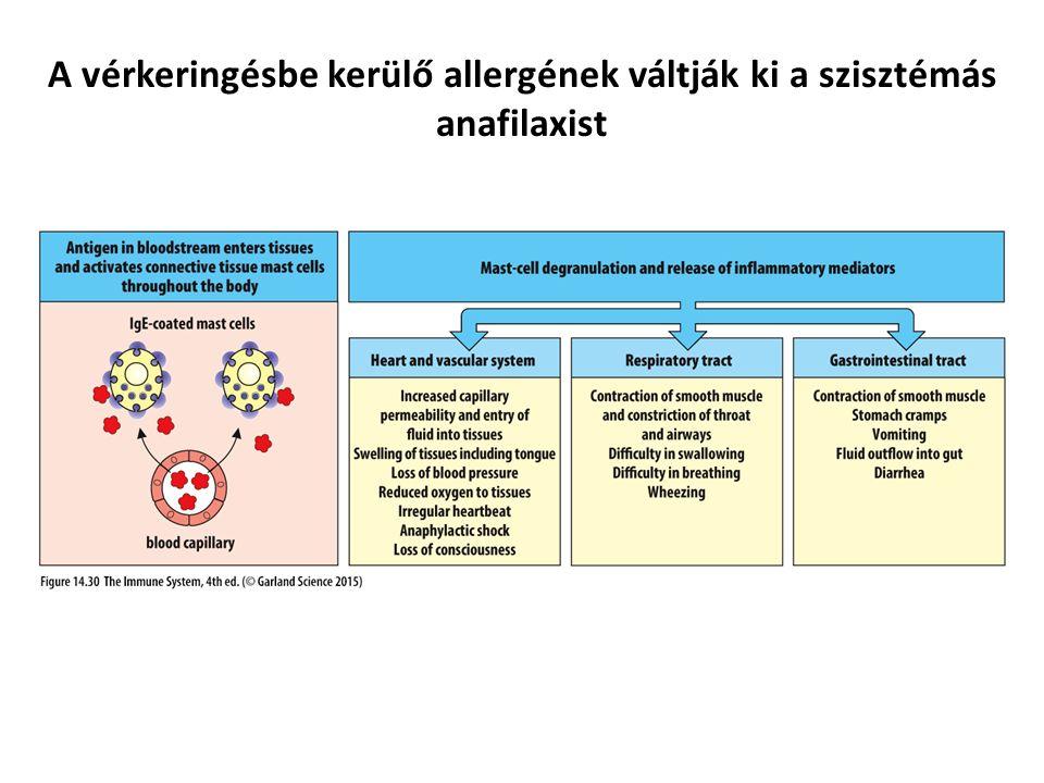 A vérkeringésbe kerülő allergének váltják ki a szisztémás anafilaxist