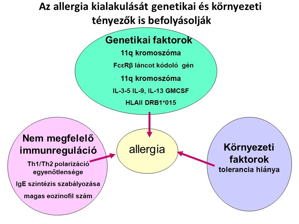 11q kromoszóma FcεRβ láncot kódoló gén 11q kromoszóma IL-3-5 IL-9, IL-13 GMCSF HLAII DRB1*015 allergia Nem megfelelő immunreguláció Th1/Th2 polarizáció egyenőtlensége IgE szintézis szabályozása magas eozinofil szám Környezeti faktorok tolerancia hiánya Az allergia kialakulását genetikai és környezeti tényezők is befolyásolják Genetikai faktorok