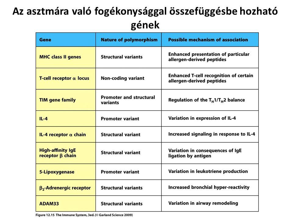 Az asztmára való fogékonysággal összefüggésbe hozható gének