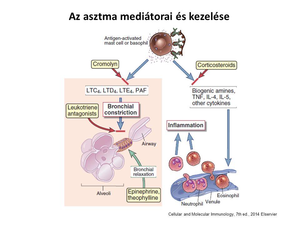Az asztma mediátorai és kezelése Cellular and Molecular Immunology, 7th ed., 2014 Elservier