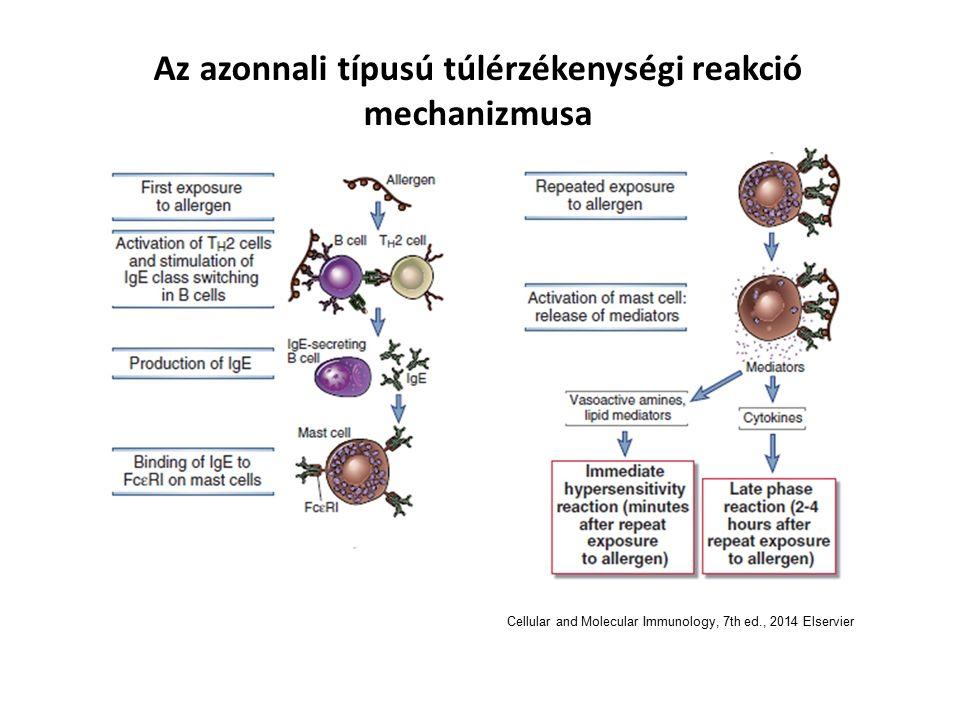 Az azonnali típusú túlérzékenységi reakció mechanizmusa Cellular and Molecular Immunology, 7th ed., 2014 Elservier